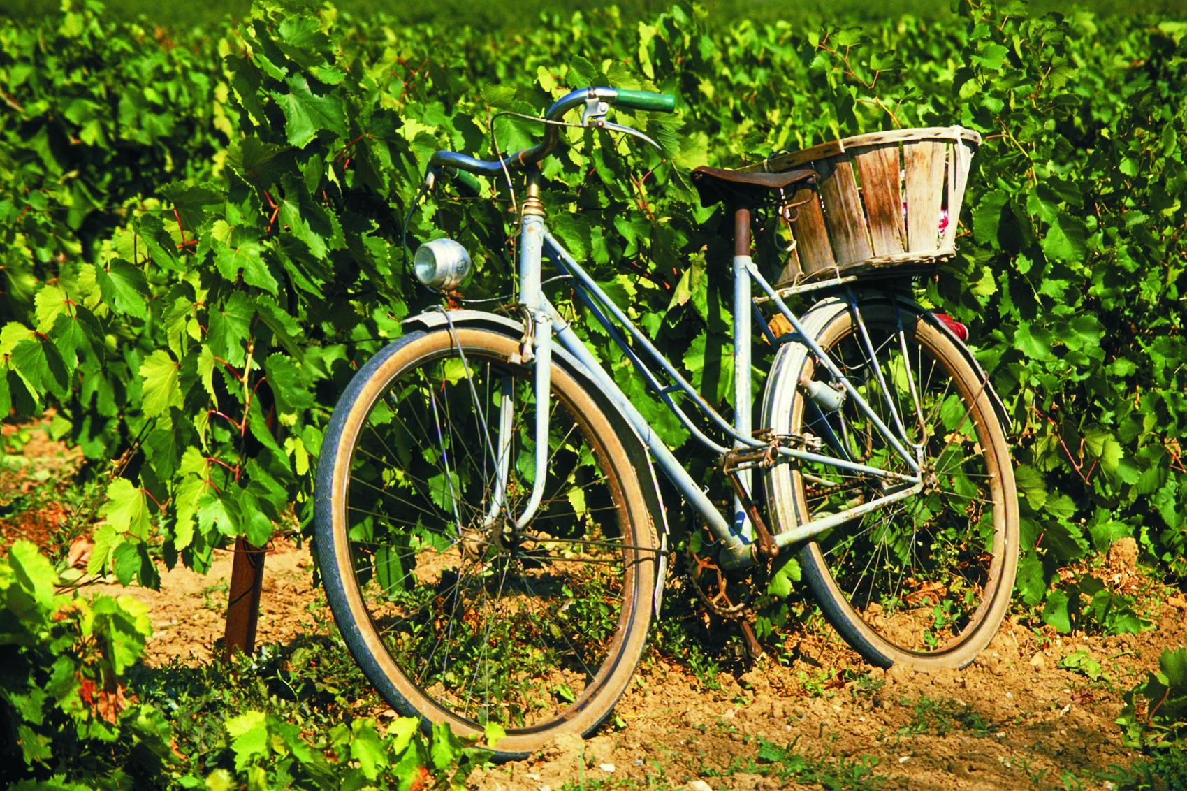 winnica rower